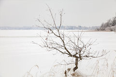 Lake Finja frozen Stock Images
