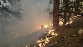 Lake Fire ~ San Bernardino Mountains ~ Big Bear ~ Summer Of 2015 Royalty Free Stock Photography
