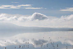 Lake of Flamingos Royalty Free Stock Image