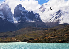 On the lake flies giant Andean condor Royalty Free Stock Images