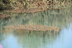 Lake and Flora. Clear water lake and flora around it and in it Stock Photos