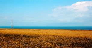 Lake and Flower in Qinghai Lake Royalty Free Stock Photography