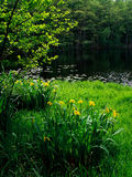 Lake and flowers Royalty Free Stock Photo