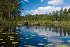 Lake flowers. Summer forest lake coast reflection Stock Image
