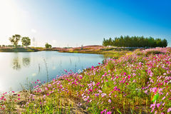 The lake and flowers Royalty Free Stock Photography