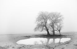 The lake in the fog. A little lake during a hard winter among the fog Royalty Free Stock Image