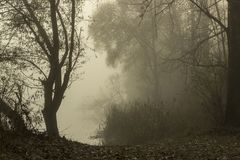 Lake with fog. Autumn landscape of lake, trees and nature in fog stock images