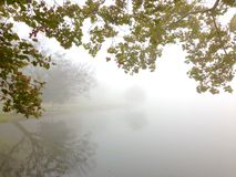 Lake fog and trees Royalty Free Stock Photography