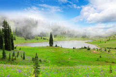 Lake in fog with wild flowers. Royalty Free Stock Photo