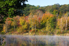 Lake Foliage Stock Photos