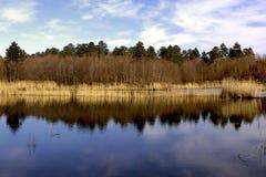 Lake and forest. Beautiful lake view in photo taken Yalova- turkey royalty free stock photo