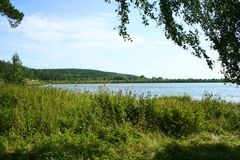 Lake forest. Forest Lake on a sunny summer day Royalty Free Stock Images