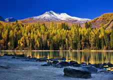 Lake and forest Royalty Free Stock Photos