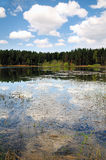 Lake at a forest. Royalty Free Stock Photos