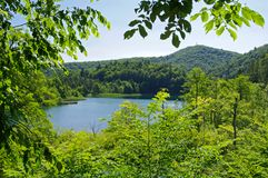 Lake in forest. Stock Images