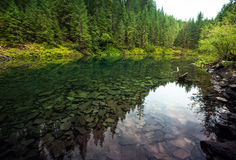 Lake in forest Royalty Free Stock Photography
