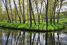Lake with forest. Lake with spring forest, Varna , Bulgaria royalty free stock images