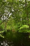 Lake in a forest Royalty Free Stock Photography