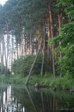 Lake in the forest. Lake in the deep forest Royalty Free Stock Image