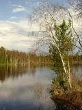 Lake and forest. Scenic view of spring trees reflecting on lake with cloudscape background Stock Image