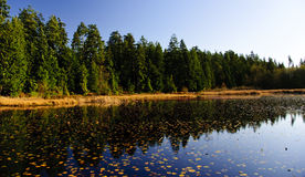 Lake in Forest. Lake in the middle of the forest during the autumn, with leaves all over the water Royalty Free Stock Photography