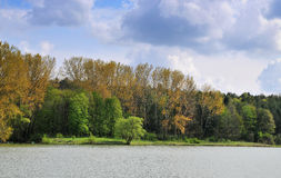Lake with forest Royalty Free Stock Image