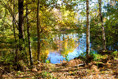 Lake in forest, autumn Royalty Free Stock Photos