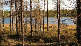 Lake and forest in autumn. Autumnal nature - forest and lake Stock Image