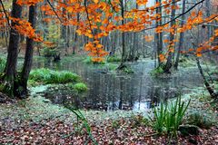 Lake and forest in autumn colours. stock photo