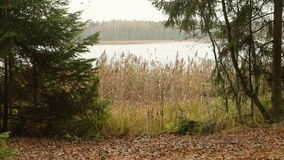 Lake in the Forest. Autumn daytime. Smooth dolly shot.  stock video footage