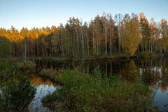 Lake in forest. Autumn. Sunset. Reflections royalty free stock photography