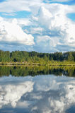 Lake and forest. royalty free stock photography