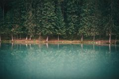 Lake in the forest with beautiful reflection. Moody tones of forest. Lake in the forest with beautiful reflection. Moody tones of forest stock image