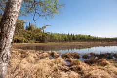 Lake and Forest Stock Photo