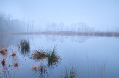 Lake in forest covered with dense fog Stock Image