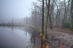 Lake in forest and dense fog Stock Photography