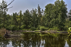 Lake in the forest. Lake in the depths of the forest Stock Images