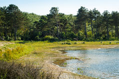 Lake and forest in dunes stock photos