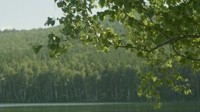 Lake in the forest. In the foreground there are branches of trees. Tree branch in the foreground lake stock video footage