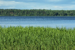 A lake with forest and grass. Like stripes Royalty Free Stock Photo