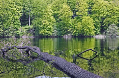 Lake in a forest. Herthasee in the Nationalpark Jasmund, Isle of Ruegen Royalty Free Stock Image