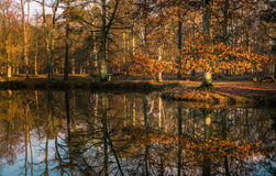 Lake and Forest Landscape Reflection Stock Photography