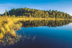 Lake and forest landscape Stock Photography