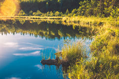 Lake and forest landscape Royalty Free Stock Photos