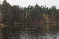 Lake in the forest, late autumn Stock Photo