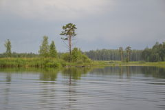 The lake in forest. Lone tree. prior to rain. wavelet on a lake Royalty Free Stock Photo