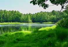 Lake in the forest. Lots of green. stock photo