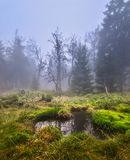 Lake in a forest meadow. In the morning of October Stock Image