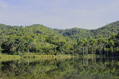 The lake and the forest. The forest is mirroring itself on the lake Stock Image