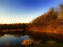 Lake with forest at morning royalty free stock photo